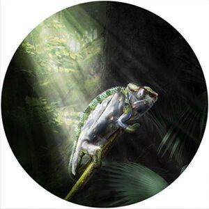 Tapis de feutrine pour tout tourne-disque vinyle 30,5 cm – Chameleon 1
